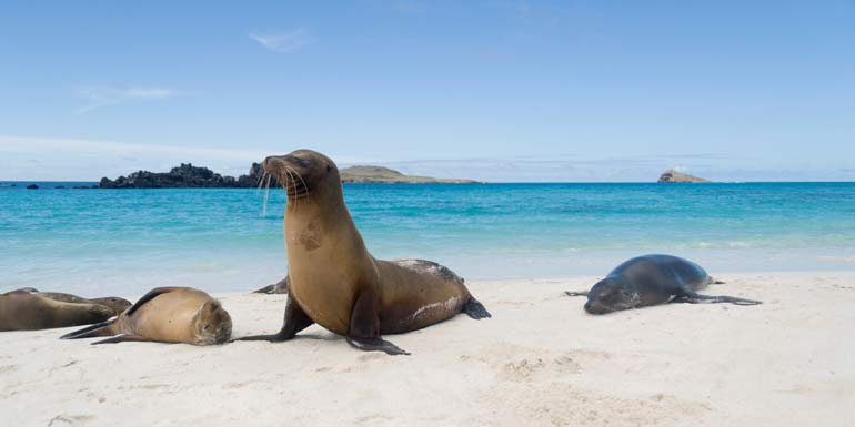 best cruises for animal lovers