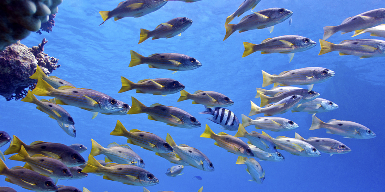 tropical fish french polynesia