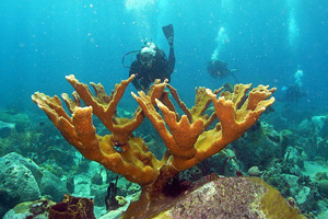 st. vincent indigo scuba coral kingstown