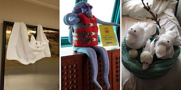 Which cruise line has the best towel animals?